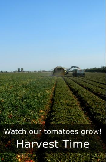 Harvest Time#1