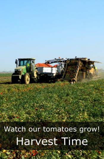 Harvest Time#3